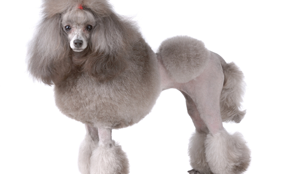 Poodle security bug 'not as bad as Heartbleed'