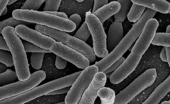 E.Coli bacteria up close. Public domain image from Rocky Mountain Laboratories/NIAID