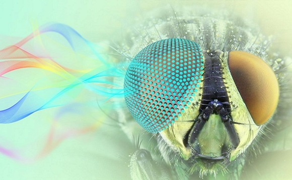 Moth eye-inspired omnidirectional microwave antenna. Image: Hojat Rezaei Nejad, Tufts University, Nano Lab